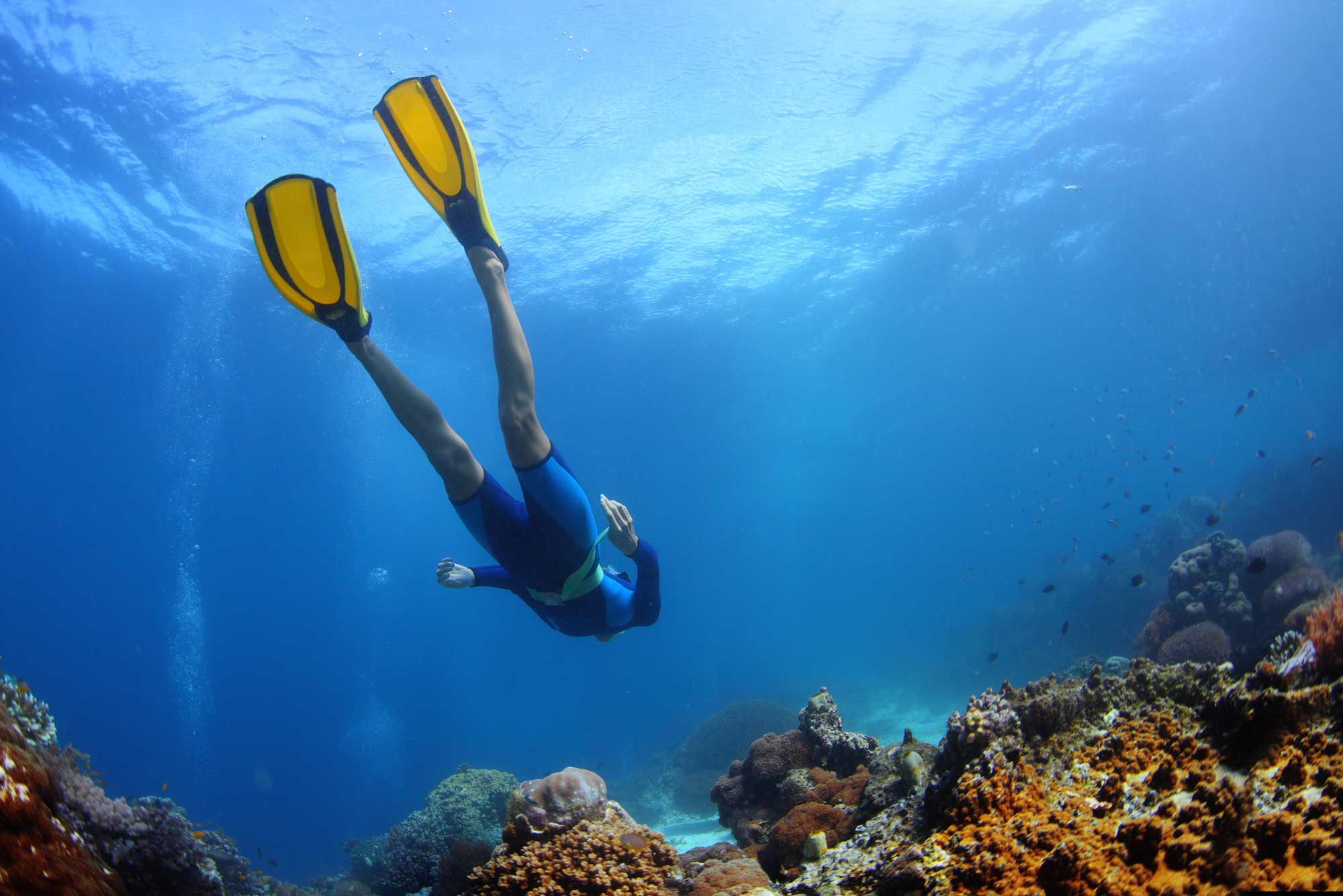 Diver Above A Reef.