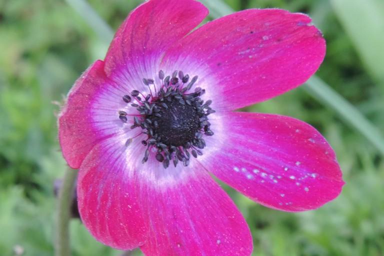Revealing Crete's wild winter flora