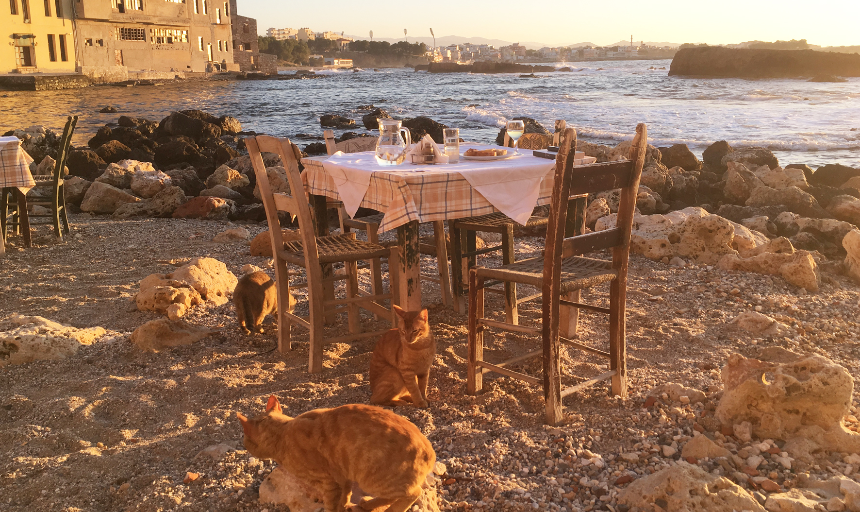 Fish dinner with feline friends in Tabakaria.